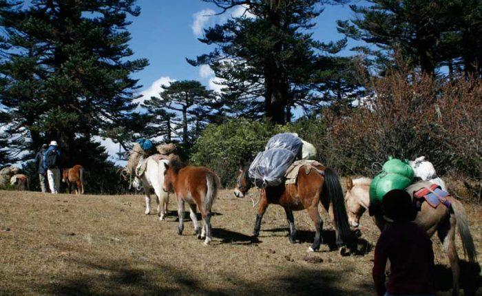 Trekking in Bhutan. Bumthang culturla trek.