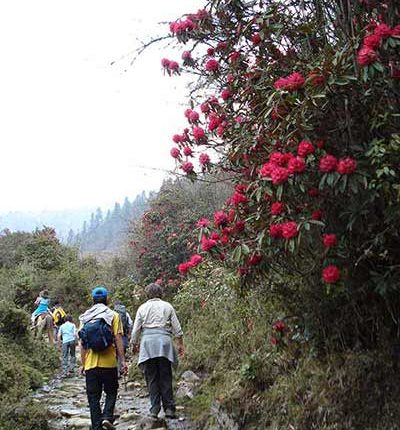Gangtey Nature Trek