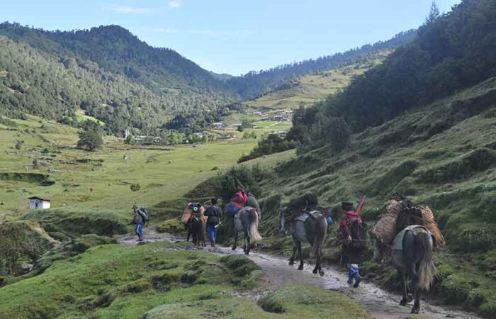 Pack animals transporting goods in Bhutan