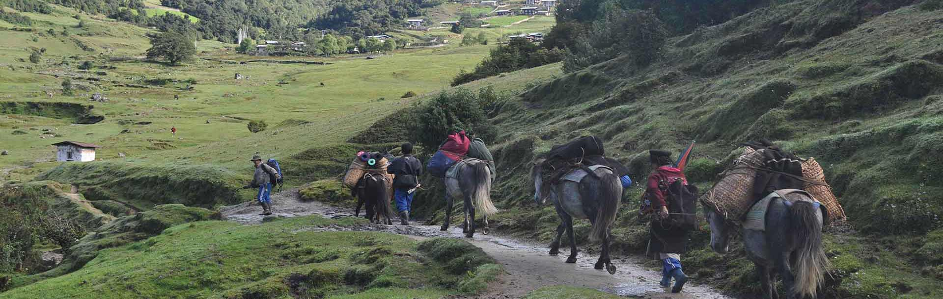 Pack horses carrying trekking supplies and equipment